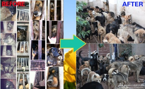4.7 Kunming Rescue of 250 dogs (LIVE)