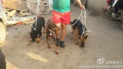 Yixin volunteer walking three of the survivors  out of the slaughter house