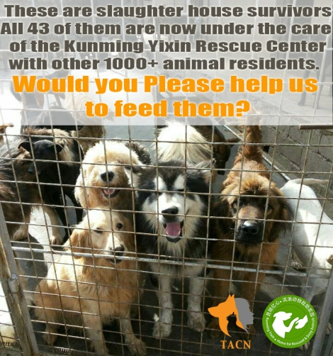 Help yixin animals